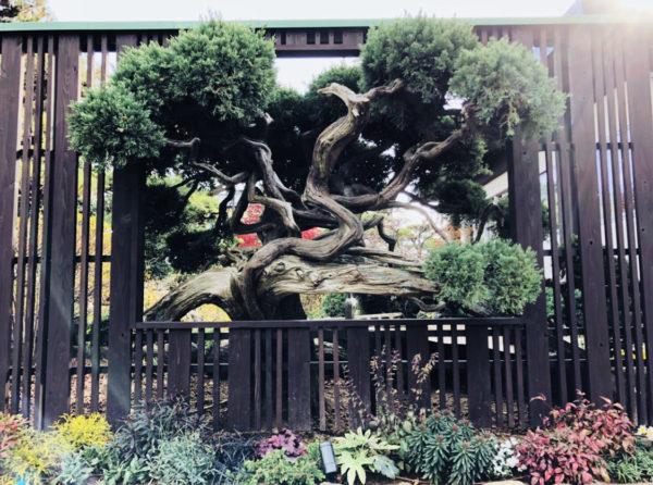 盆栽アート